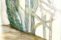 006 Schattenweg Montegufoni 1996